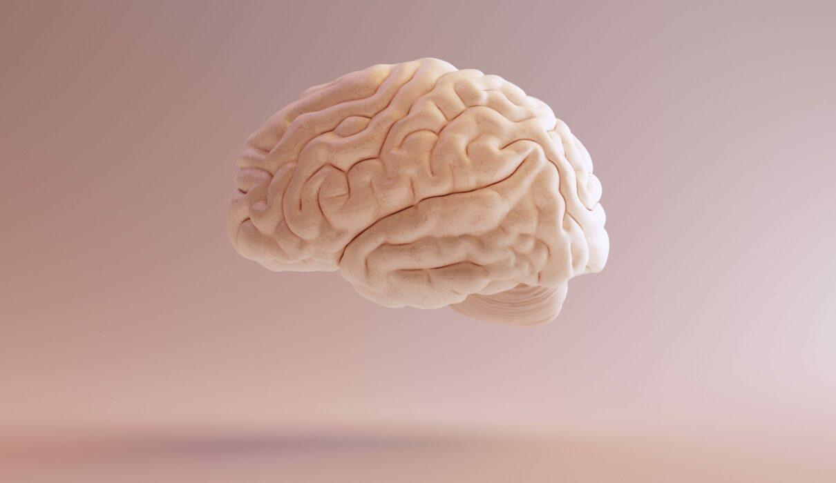 Video: Brain awareness