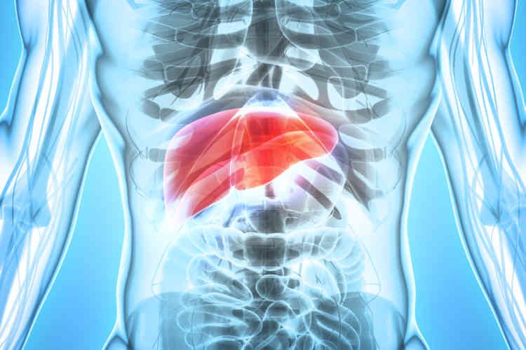 Hepatitis A, B and C: an overview - myDr com au