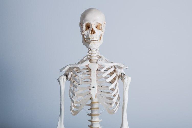 Rüyada Müzede İnsan Vücudu İskeleti Kafeste Görmek